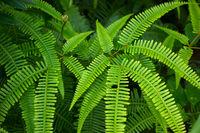 Lush green fish bone fern