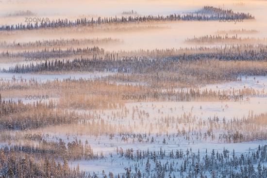 foggy winter landscape, Lapland, Sweden