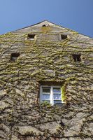 Wild wine grows on the building façade in the Old Town of Staufen
