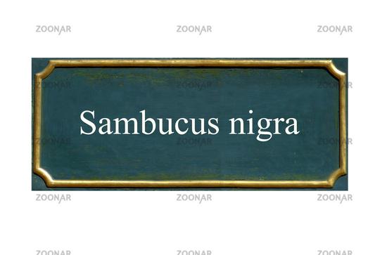 shield  Sambucus nigra