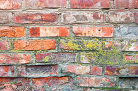 Lichen on a brick wall. Ancient red brick wall with moss as a background. Texture of old wall covered dry moss.