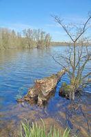 D--Niederrhein--an den Krickenbecker Seen im Naturpark Schwalm-Nette3.jpg