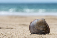 A shell in the sunshine on the sandy beach