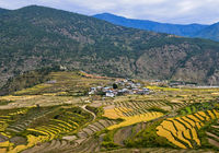 Paddy rice terrace fields near the village of Teoprongchu, Bhutan