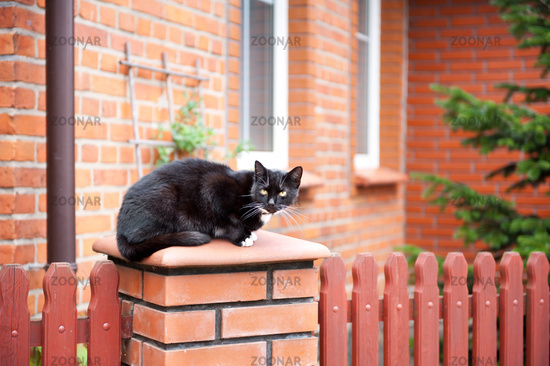 one lonely stray black cat sitting on fence