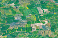 Paddy fields aerial view