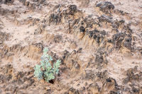 sage brush and crypto soil crust