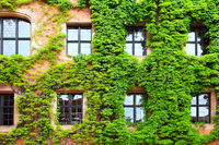 Old house with ivy