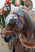 Spaten Oktoberfest Horse