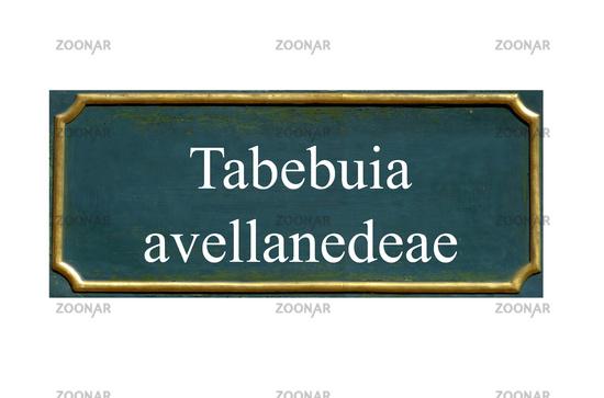 shield tabebuia avellanedeae