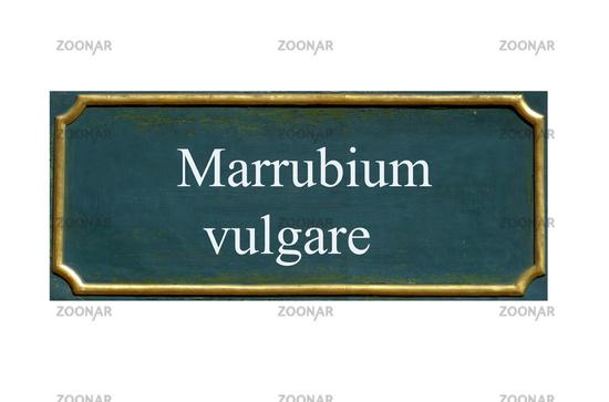 shield marrubium vulgare