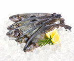Five fresh rainbow trout with lemon on ice