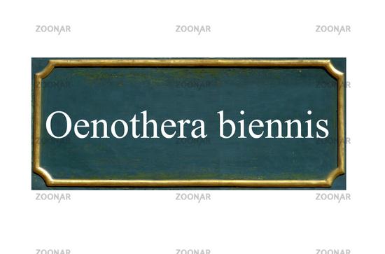 shield oenothera biennis