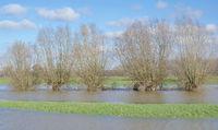D--NRW--Frühjahrshochwasser am Niederrhein.jpg