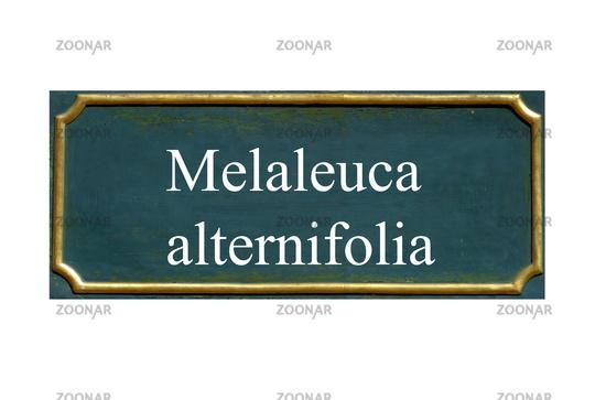 shield melaleuca alternifolia