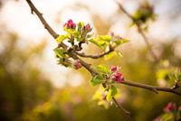 Ornamental flowering
