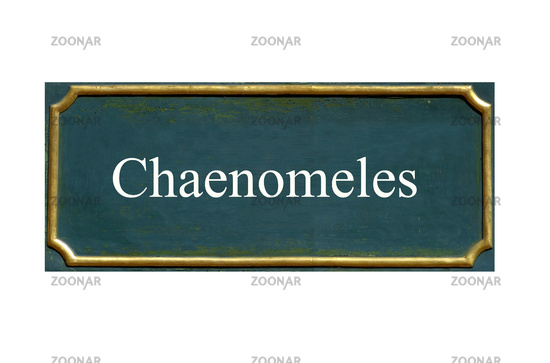 shield Chaenomeles
