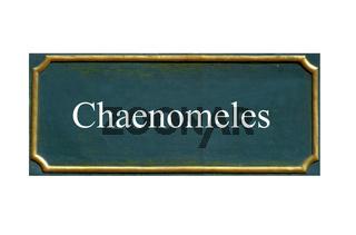 schild Chaenomeles, Zierquitte