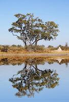 landscape in Moremi Game Reserve, Botsuana