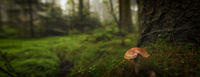mushroom in the wood