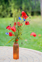 Bunch of of red poppies and cornflowers