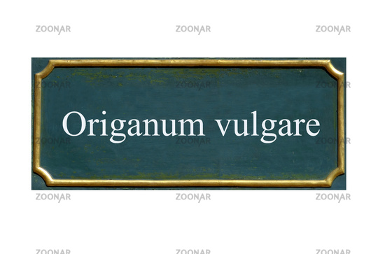 shield origanum vulgare