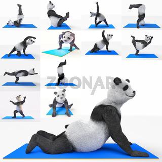 yoga animal sport panda training excersice set