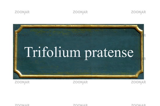 shield trifolium pratense