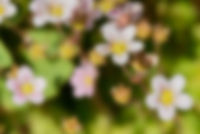 Blurred background of flowers