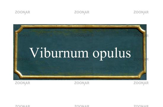shield viburnum opulus, Common snowball