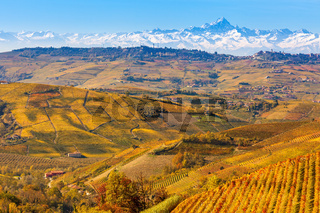 Autumnal vineyards and Alps in Piedmont, Italy.