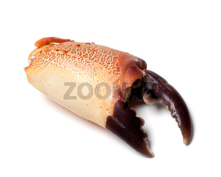 Boiled chela crab isolated on white background