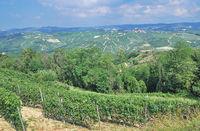 Vineyard Landscape near Asti,Piedmont,Italy