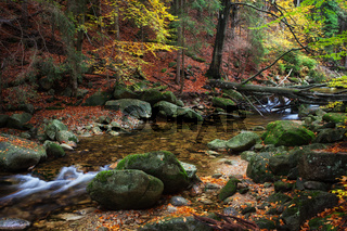 Creek in Autumn Forest