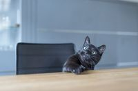 A black cat sitting at the kitchen table and star