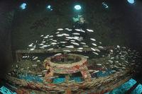 Taucher in der Jacques Cousteau Unterwasserstation Precontinent II, Sudan