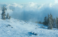 Snowy fir trees on winter hill.