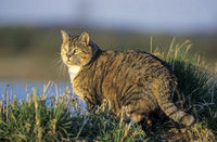 Domestic Cats usually sleep between 12 to 16 hours