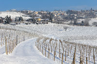 Vineyards of Piedmont covered with snow.