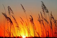 Sunrise at Africa