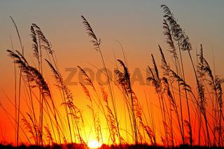 Sonnenaufgang in Afrika; Sunrise at Africa