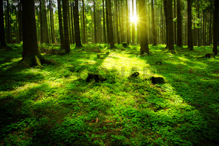 Summer forest with sun and shadow