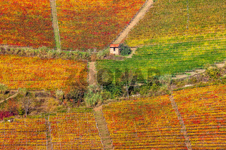 Colorful vineyards on the hills in Piedmont, Italy.
