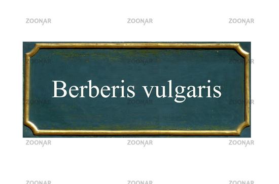 shield Berberis vulgaris
