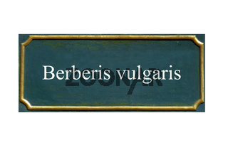 schild Berberis vulgaris, gewoehnliche berberitze, sauerdorn