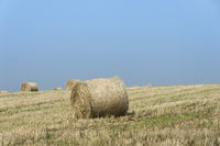 Bales of straw lying on a stubble field under blue sky