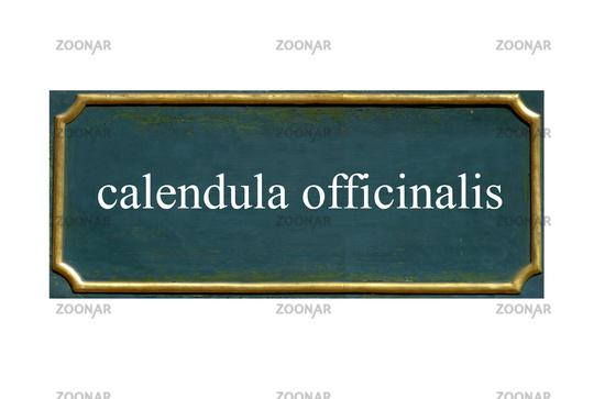 shield calendula officinalis