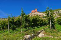 Saale Unstrut Weinberge - Saale Unstrut vineyards 02