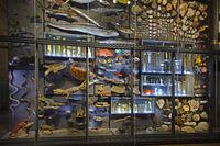 Vitrinen mit Exponaten, Naturkundemuseum, Museum für Naturkunde,