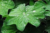 Regentropfen auf Pflanzenblatt